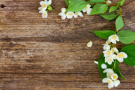 Jasmine fresh flowers and leaves frame on textured wooden background