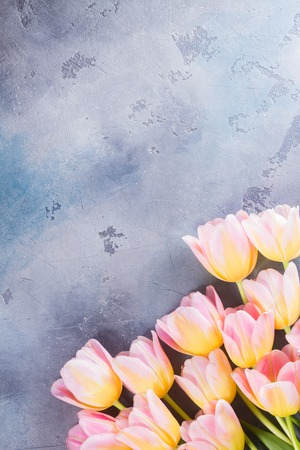 Row of pink and yellow tulips on gray stone