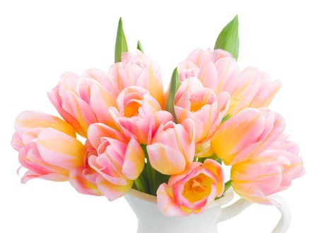 Posy of fresh pink and yellow tulips close up