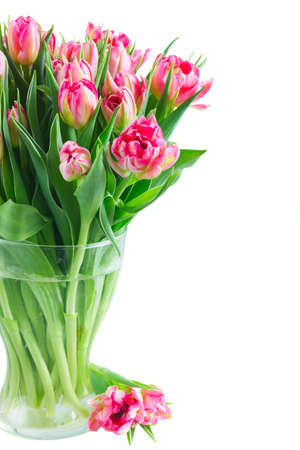 Bouquet of bright pink tulips in glass vase close up isolated on white background Stock Photo