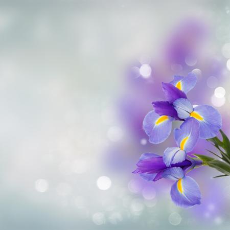 blue irises flowers close up over blue background