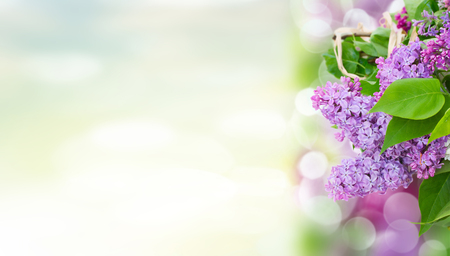 Bunch of lilac flowers with green leaves in spring garden banner Stock Photo