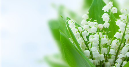 lilly of the valley flowers on blue bokeh background banner Reklamní fotografie