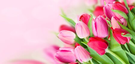 bouquet of fresh spring pink tulips on bokeh background banner