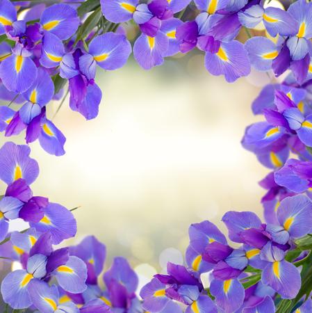 blue irises flowers frame on gray bokeh background Stock Photo