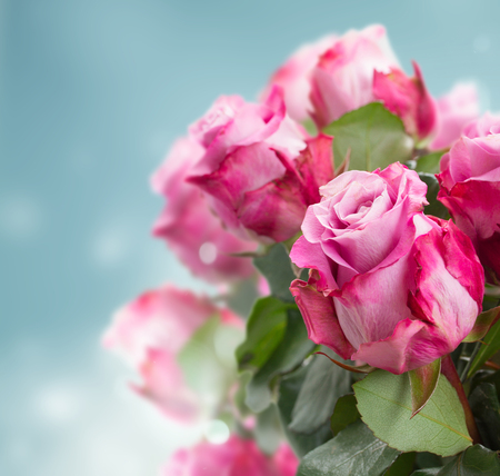 chic: fresh pink roses on blue bokeh background