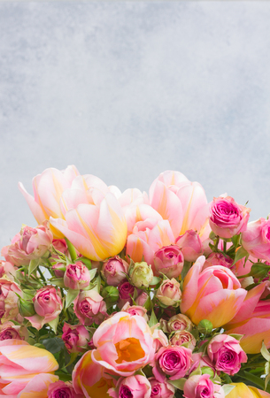 fresh pink and yellow tulips and roses close up on gray background with copy space Stock Photo