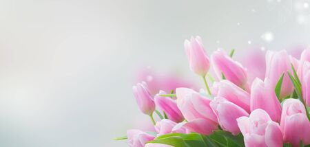 Bouquet of pink tulips close up with copy space on blue backgrpound banner