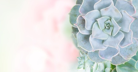 One succulent green plants with copy space on garden bokeh background banner