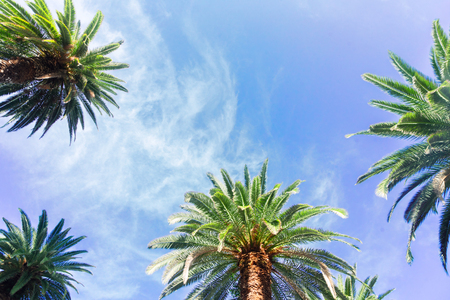 View of exotic tropical palm tree frame on blue sky background