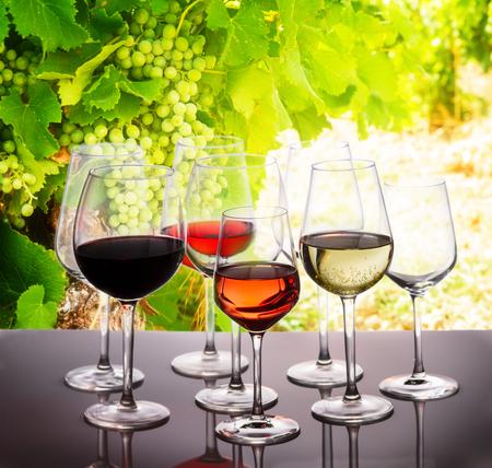 Wijnproeven in wijn tuin, set van glazen met rode, witte en rose wijn, fel groene grapevine op achtergrond Stockfoto