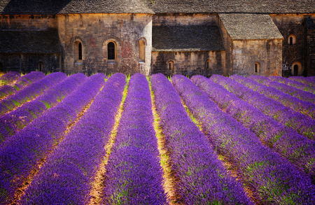 Abbey Senanque and blooming Lavender field flowers, France, retro toned Stock Photo