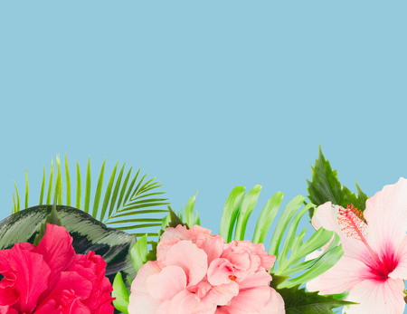 tropical fresh flowers and leaves - border of fresh multicilored hibiscus flowers and exotic palm leaves on blue
