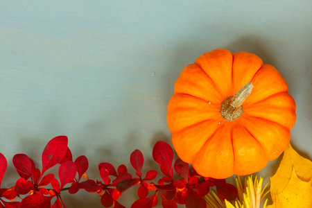 one orange pumpkin harvest with fall leaves and berries, copy space on blue table