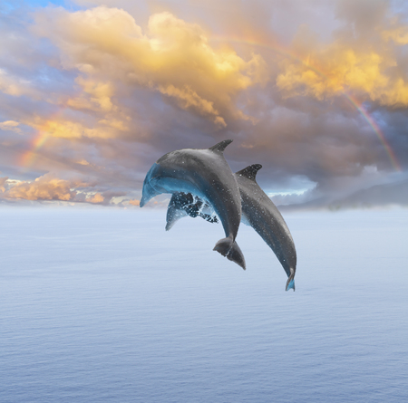 Two jumping dolphins, beautiful seascape with deep ocean waters and, rainbow cloudscape at sunrise Stock Photo