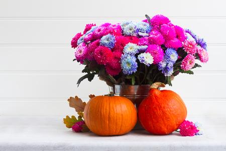 dahlia: ramo de flores de crisantemo rosa y azul con dos calabazas, espacio de copia sobre fondo blanco