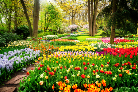Colourful Tulips Flowerbeds and Path in an Spring Formal Garden, retro toned