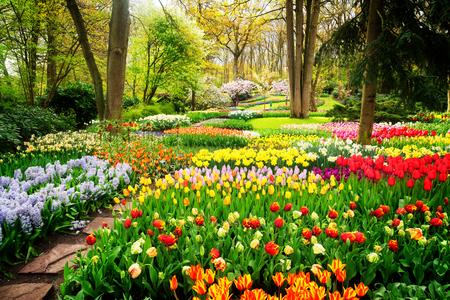Kolorowe tulipany kwietniki i ścieżka w ogrodzie formalnym wiosną, stonowanych retro