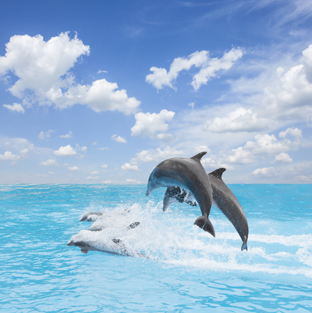 pack of jumping dolphins, beautiful seascape with deep ocean waters and cloudscape at bright day Stock Photo