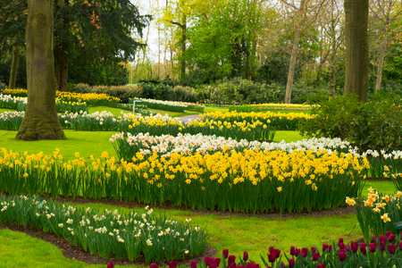 Colourful Tulips Flowerbeds and Green Grassbed in an Spring Formal Garden