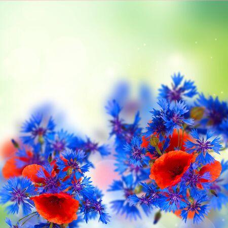 summer field flowers on green meadow garden bokeh background Stock Photo