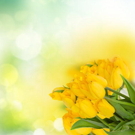 bouquet of fresh yellow tulips on green bokeh background