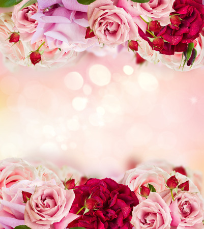 Pink blooming rose buds and flowers in rose garden with lights bokeh, copy space on pink abstract Valentines Day background Stock Photo