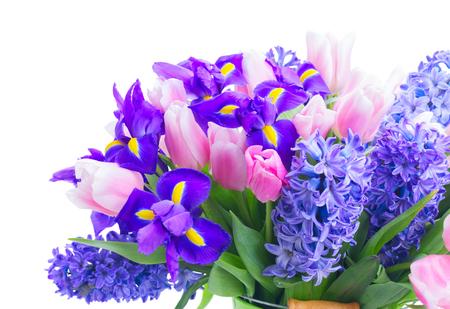 Pink tulips, irises and blue hyacinths fresh flowers close up isolated on white background 스톡 콘텐츠