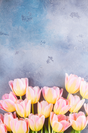 pink and yellow tulips on gray stone background, top view