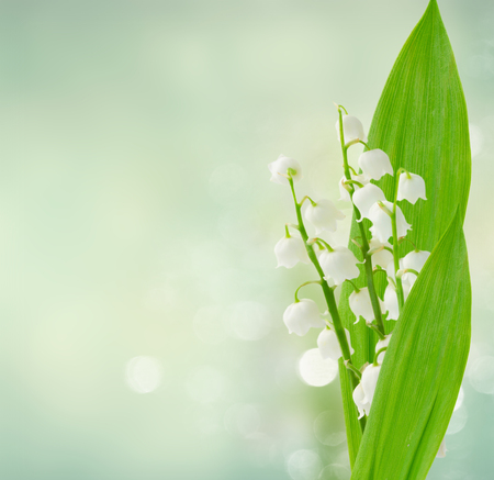 Lilly of the valley flowers and leaves ob blue bokeh background Stok Fotoğraf