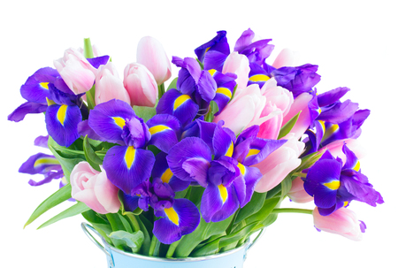 Bouquet of blue irises and pik tulips close up isolated on white background