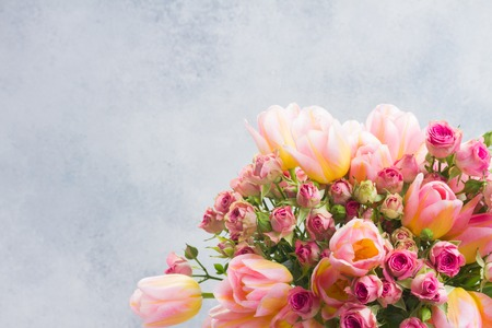 fresh pink and yellow tulips and roses flowers close up on gray background Stock Photo