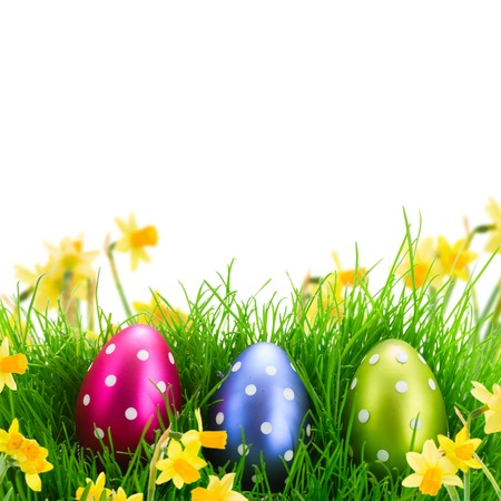 Tree Easter eggs in green grass in spring garden over white background with copy space