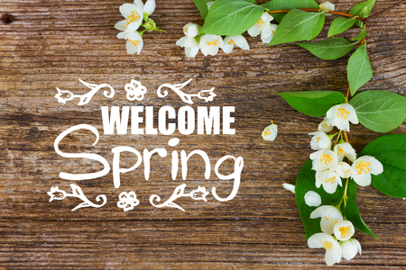 Jasmine fresh flowers and leaves frame on textured wooden background with welcome spring greetings Stock Photo