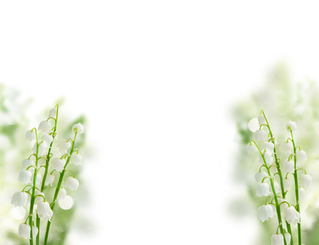 Lilly of the valley flowers over white background