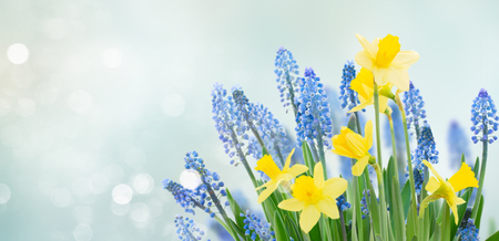 Spring bluebells and daffodils flowers under blue sky banner Stock Photo