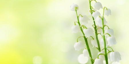 Lilly of the valley flowers on green bokeh background banner