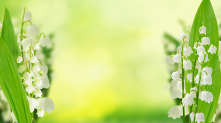 Lilly of the valley flowers and leaves on green bokeh background banner with copy space Foto de archivo