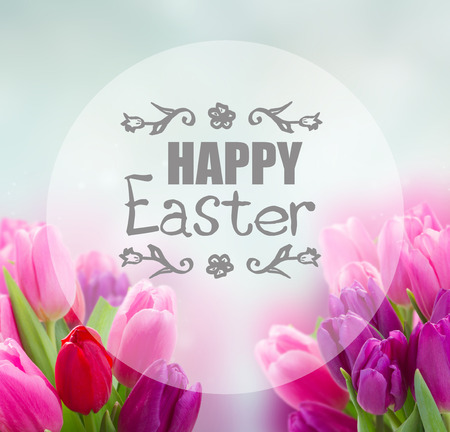 bunch of pink and purple tulip flowers on blue background with happy Easter greeting