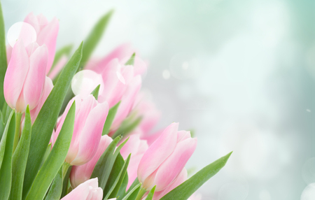 close up of pink tulips on blue sky background with bokeh lights baanner