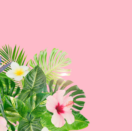 Tropical green leaves and flowers frame on pink background with copy space Stock Photo