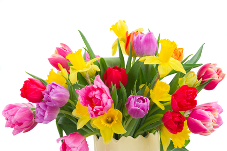 fresh pink, purple and red tulips and yellow daffodils flowers bouquet isolated on white background Stock Photo