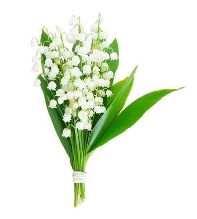 Lilly of the valley flowers and leaves bouquet isolated on white background 스톡 콘텐츠
