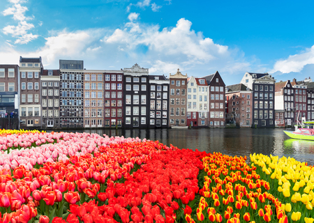 Typical dutch old houses over canal with tulips, Amsterdam, Netherlands