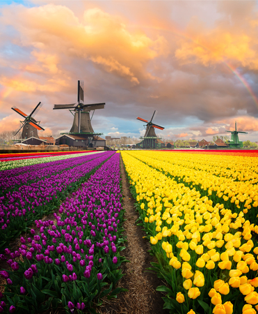 Dutch scenery with windmill of Zaanse Schans over Zaan river at summer day, Netherlands