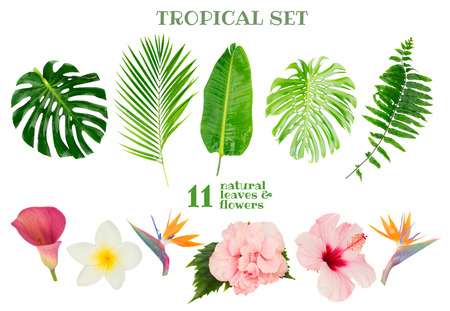 Tropical green fresh leaves and exotic flowers isolated on white background