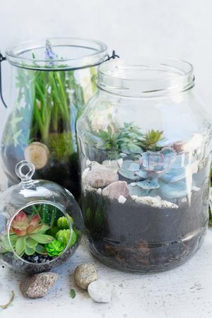 mason glass jars with greenery plants inside close up, indoor gardening concept Reklamní fotografie