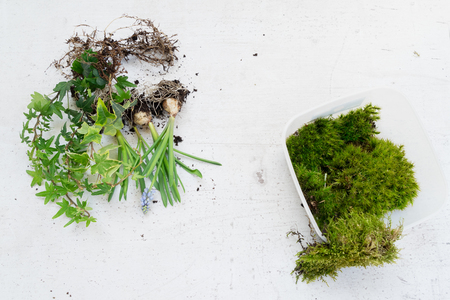 green plants and flowers on white wooden desk ready for planting, indoor gardening concept Reklamní fotografie
