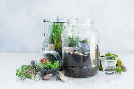 mason jars with plants inside on light gray background, indoor gardening concept