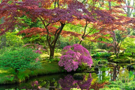 green grass and blooming trees in japanese garden in The Hague, Netherlands